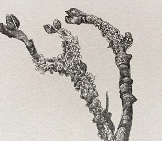 twig 1_edited