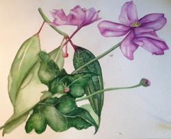 flower painting photo