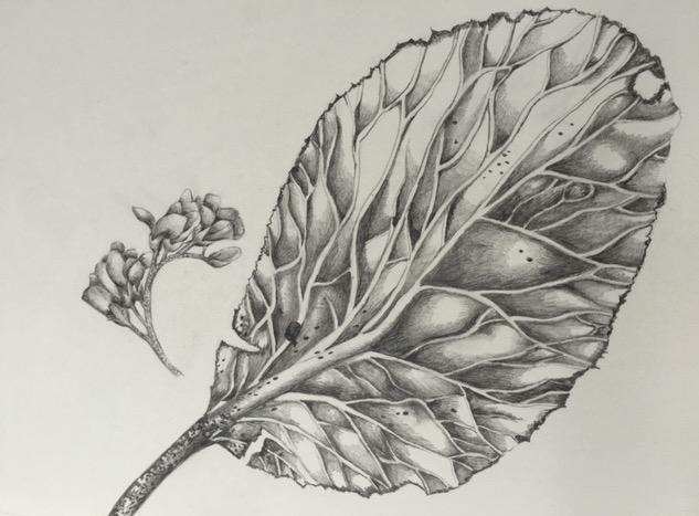 leaf_edited
