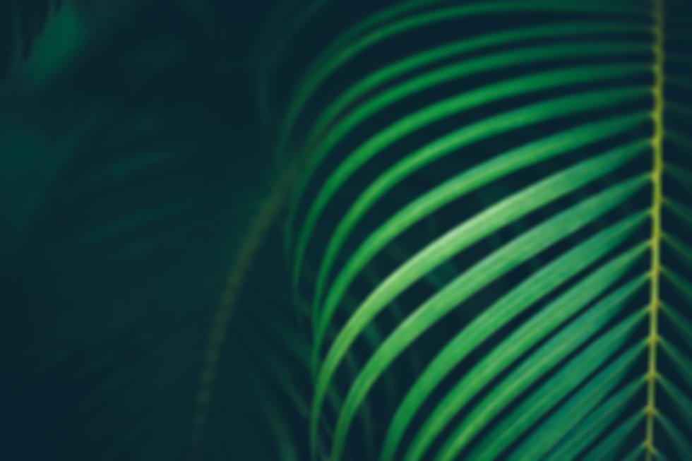 palm-leaf-background_edited.jpg