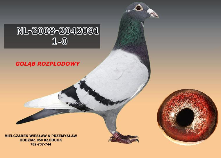 NL-2008-2042091