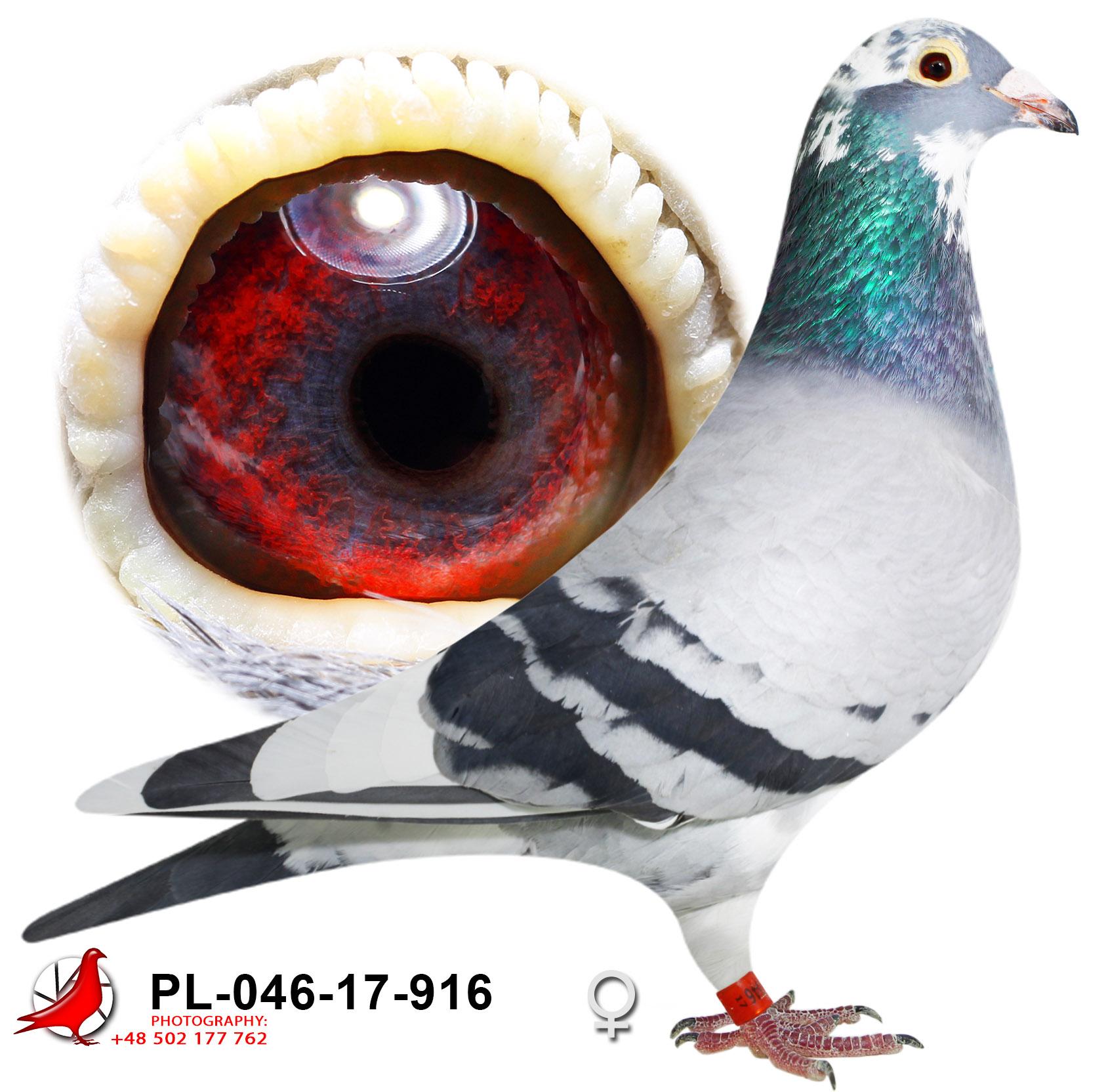 pl-046-17-916_h (1)