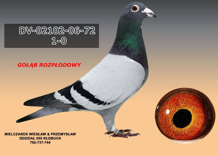 DV-02102-06-72