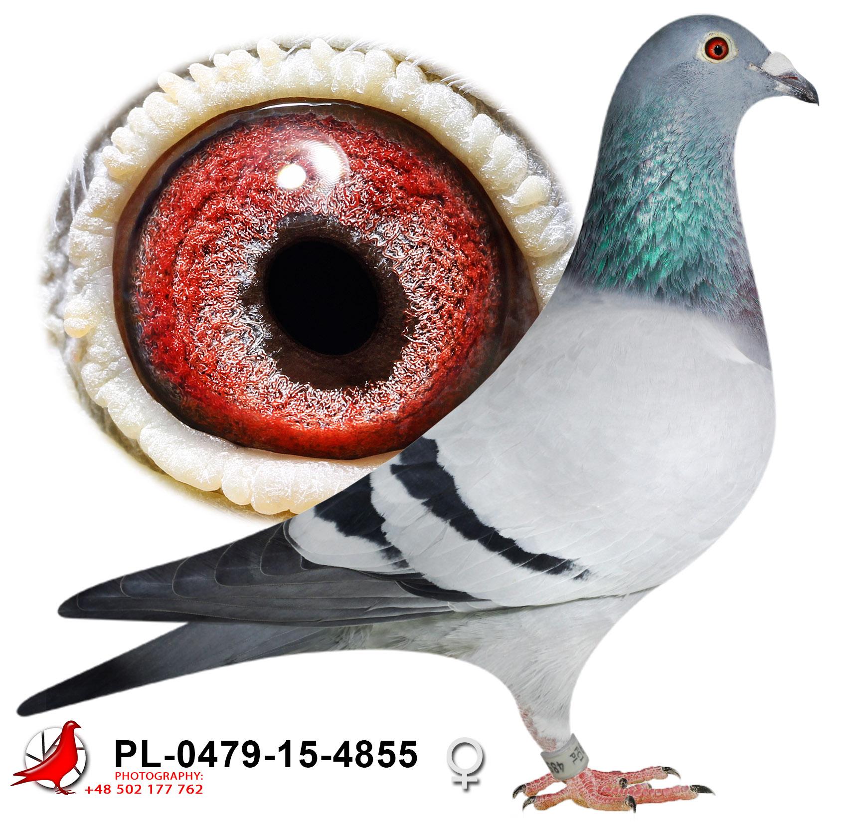 pl-0479-15-4855_h
