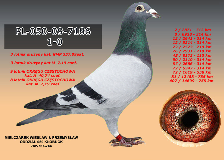 PL-050-09-7186