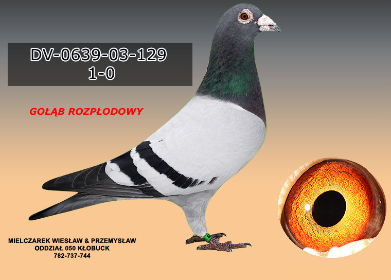 DV-0639-03-129
