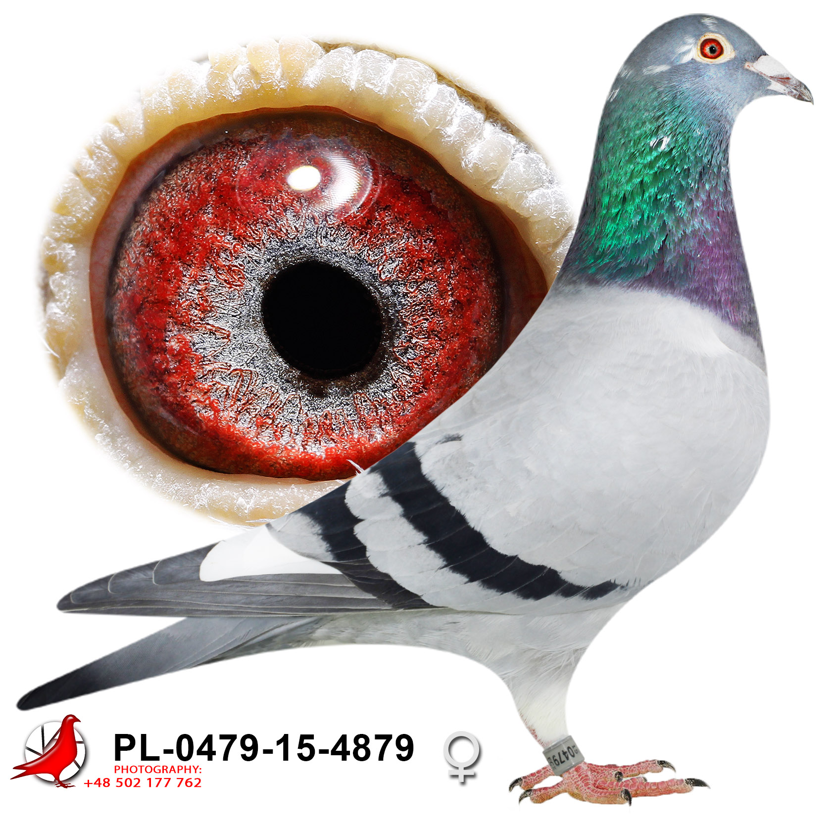 pl-0479-15-4879_h