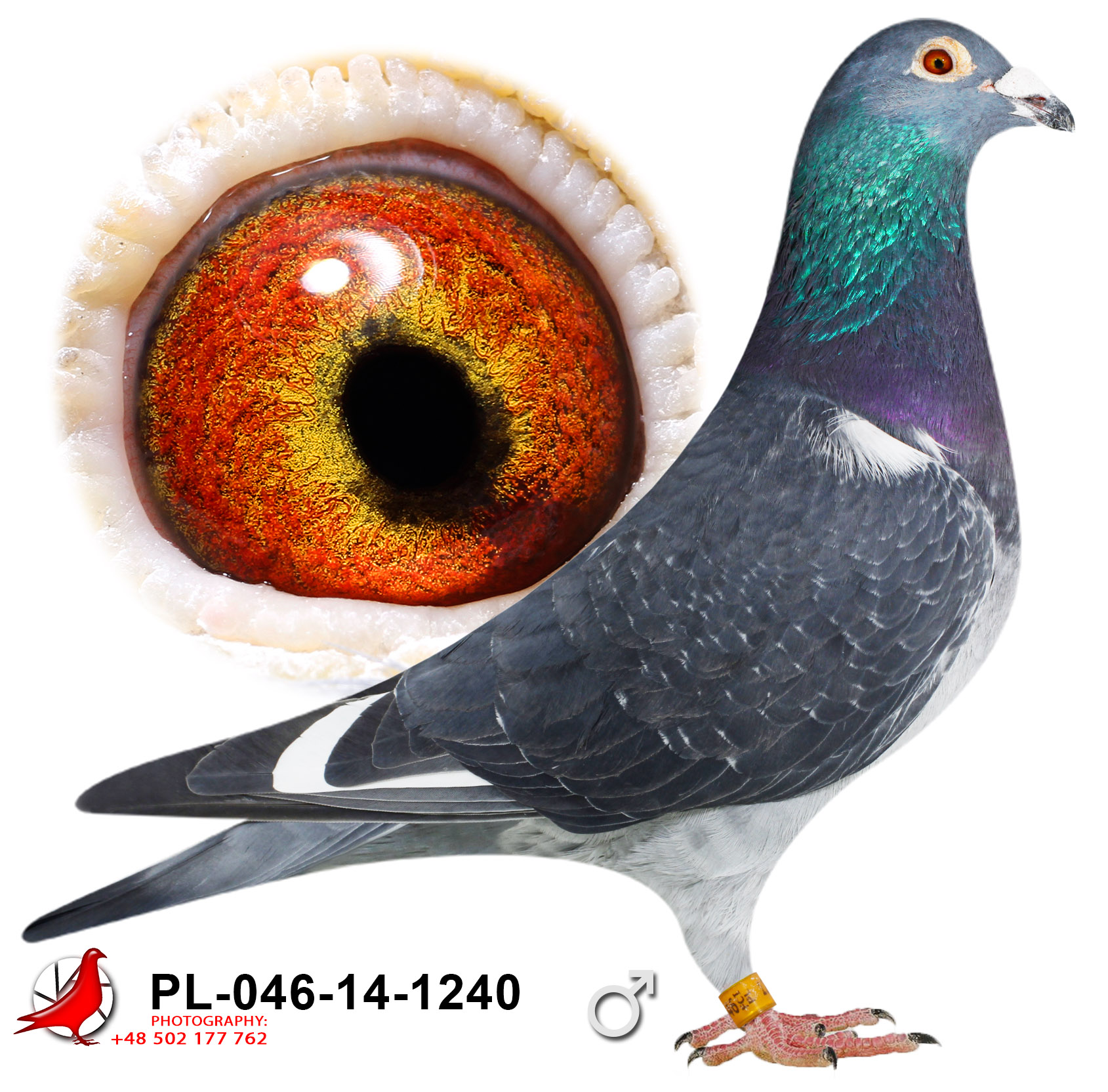 pl-046-14-1240_c