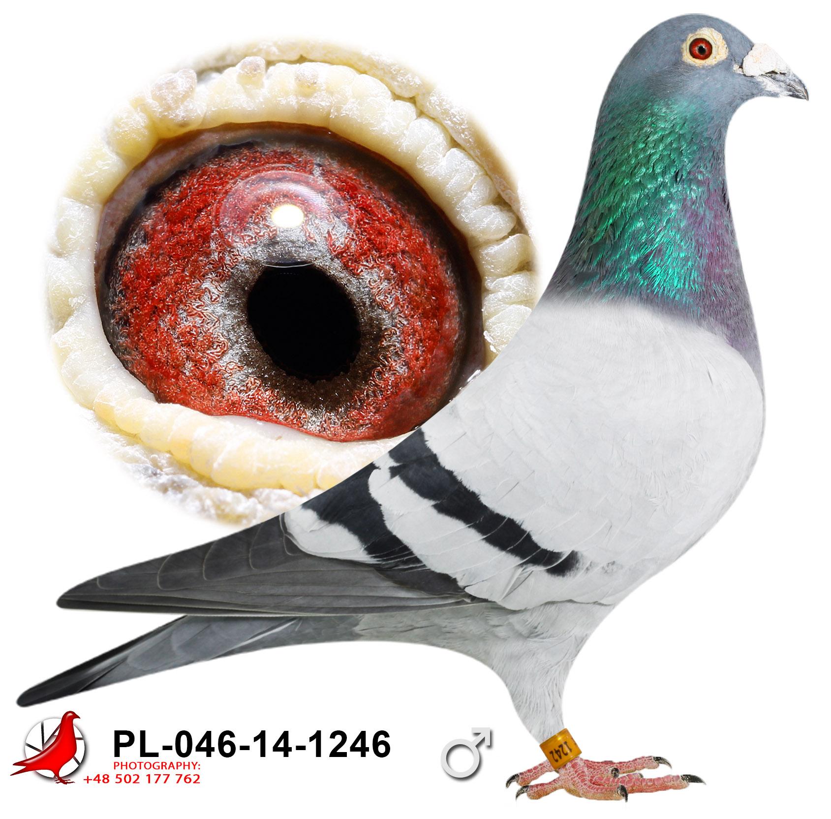 pl-046-14-1246_c
