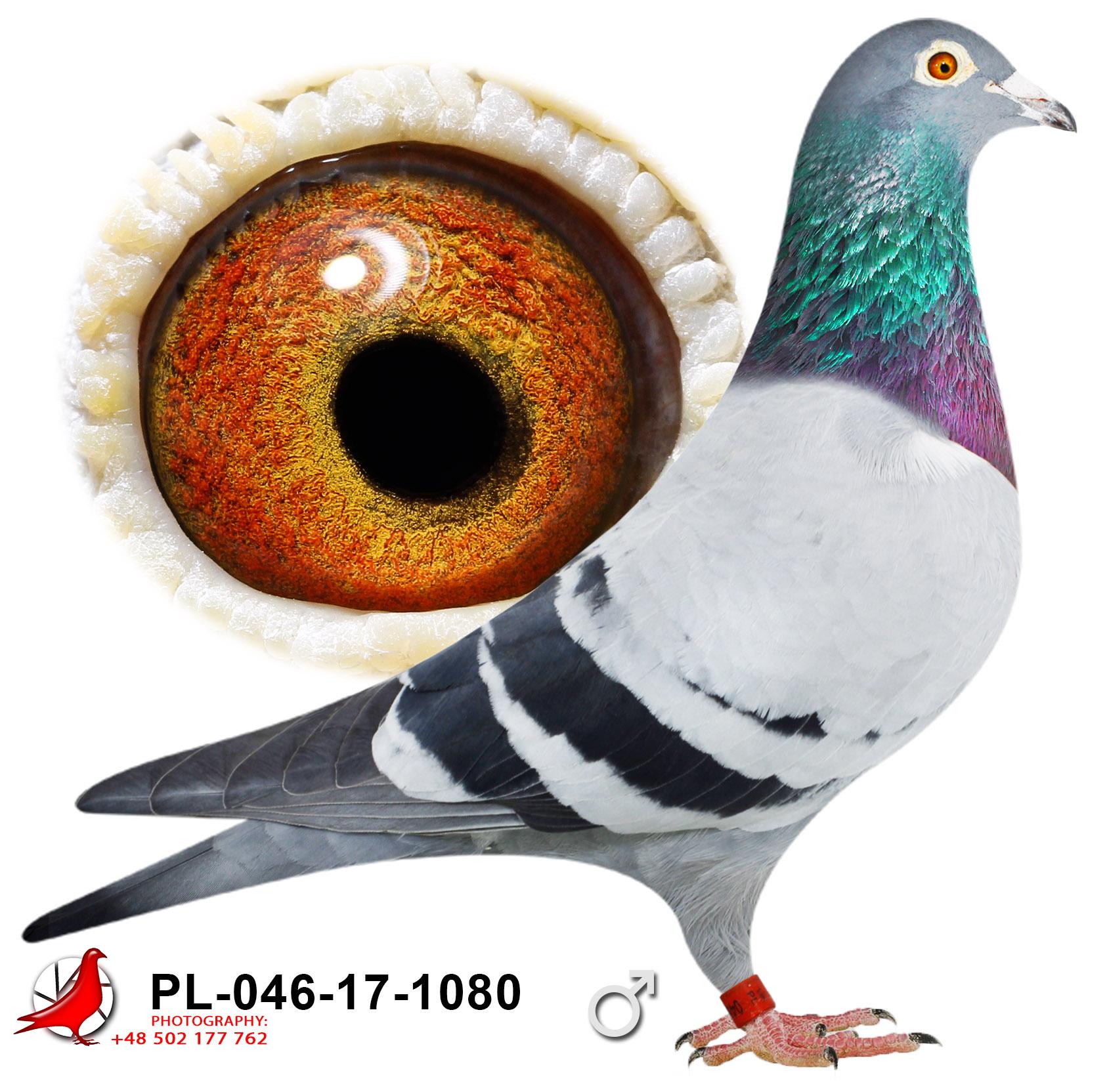 pl-046-17-1080_c