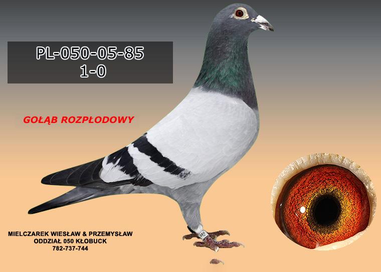 PL-050-05-85