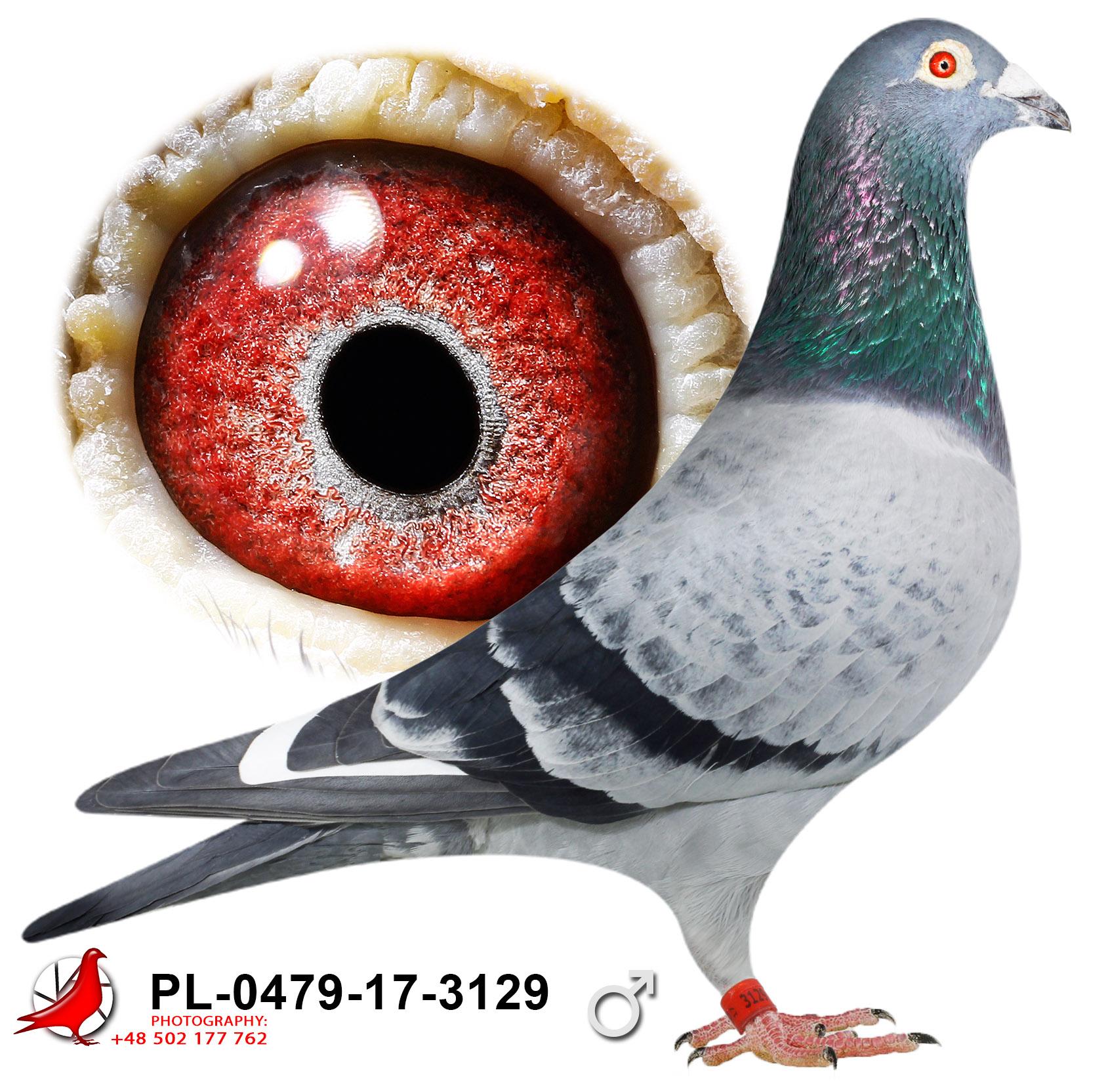 pl-0479-17-3129_c
