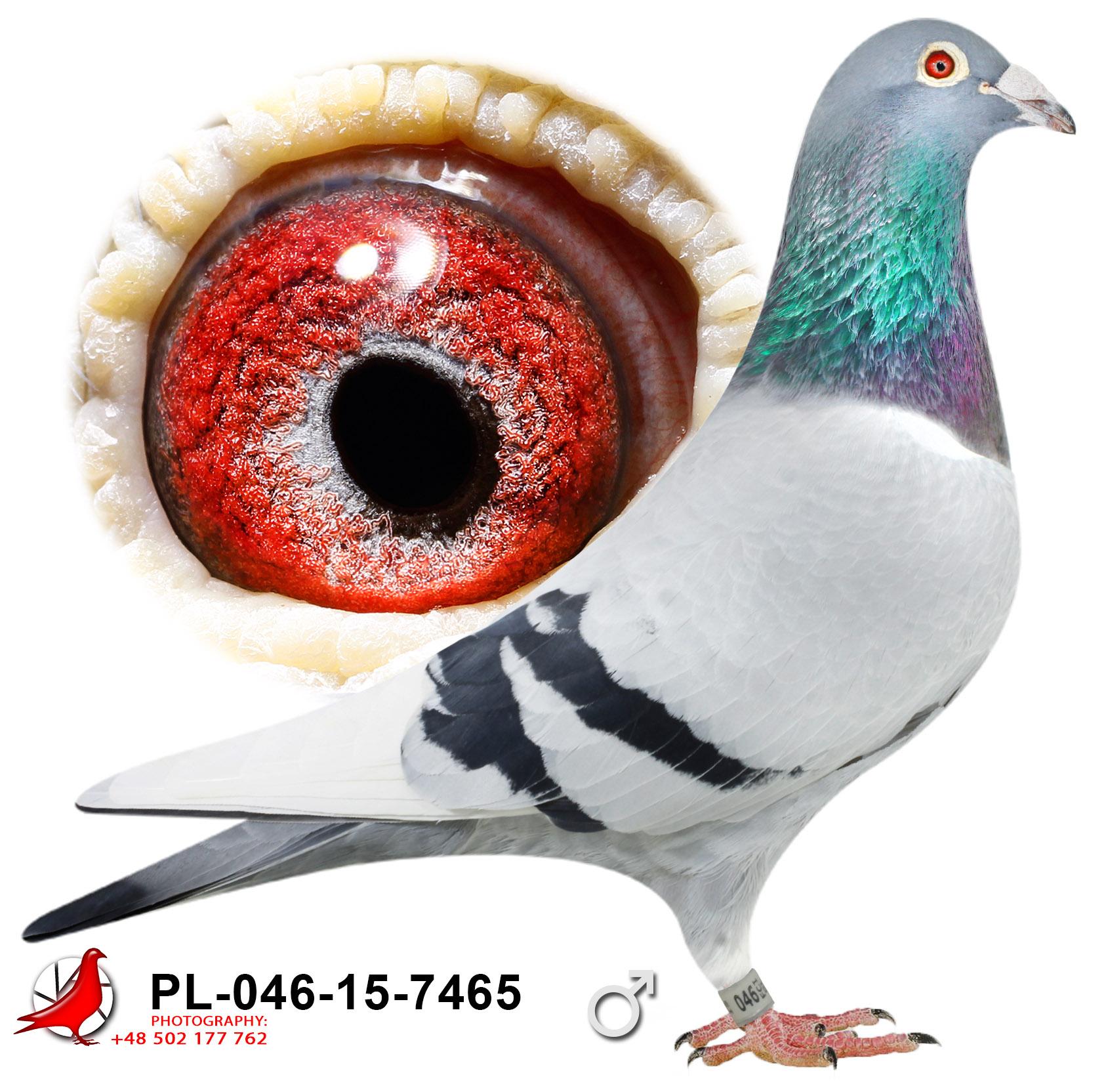 pl-046-15-7465_c (1)