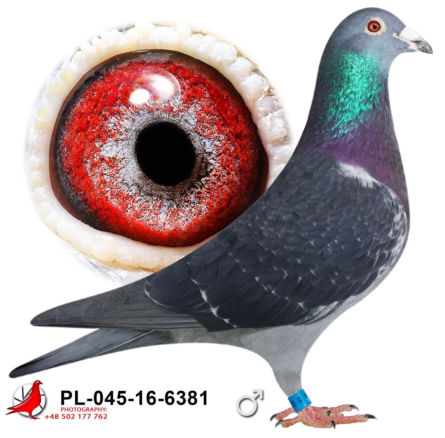 pl-045-16-6381_c (1)