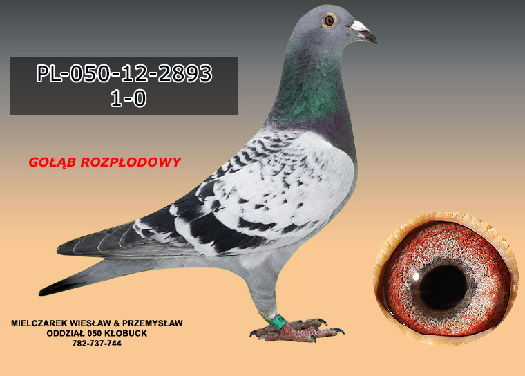 PL-050-12-2893