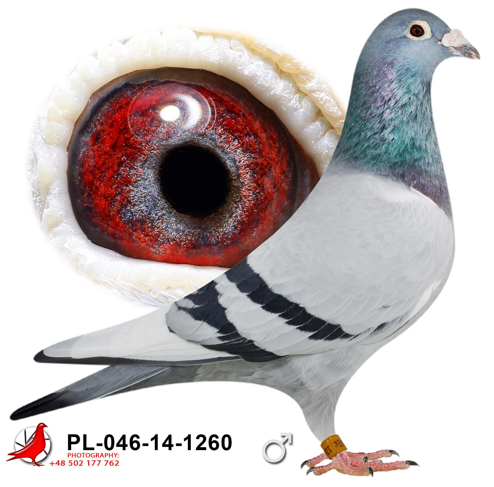 pl-046-14-1260_c