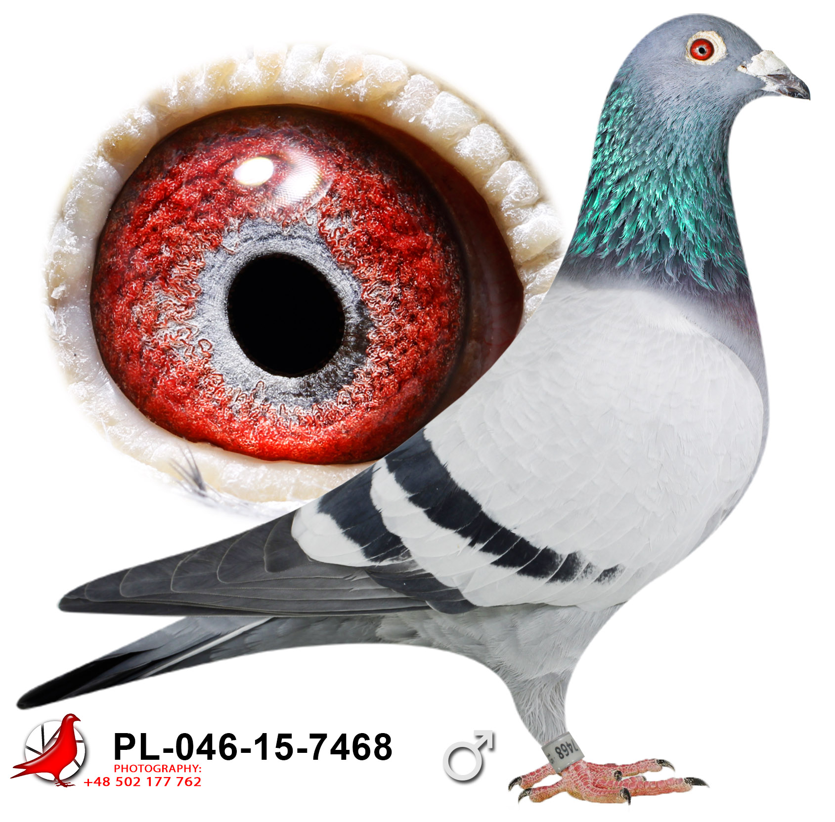 pl-046-15-7468_c (1)