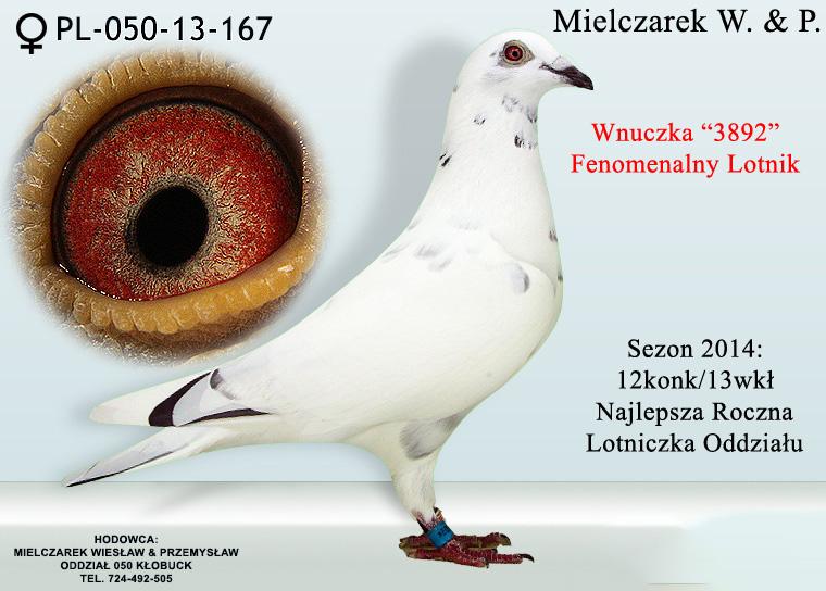 pl-050-13-167
