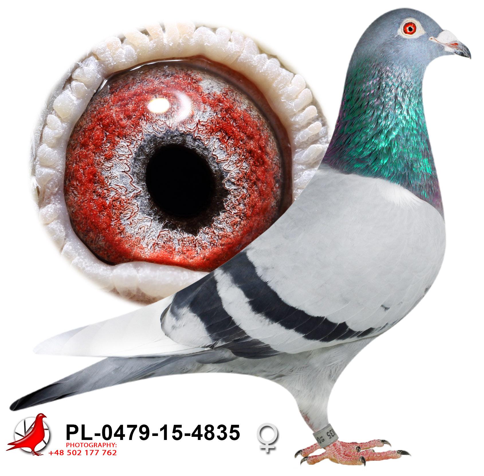 pl-0479-15-4835_h