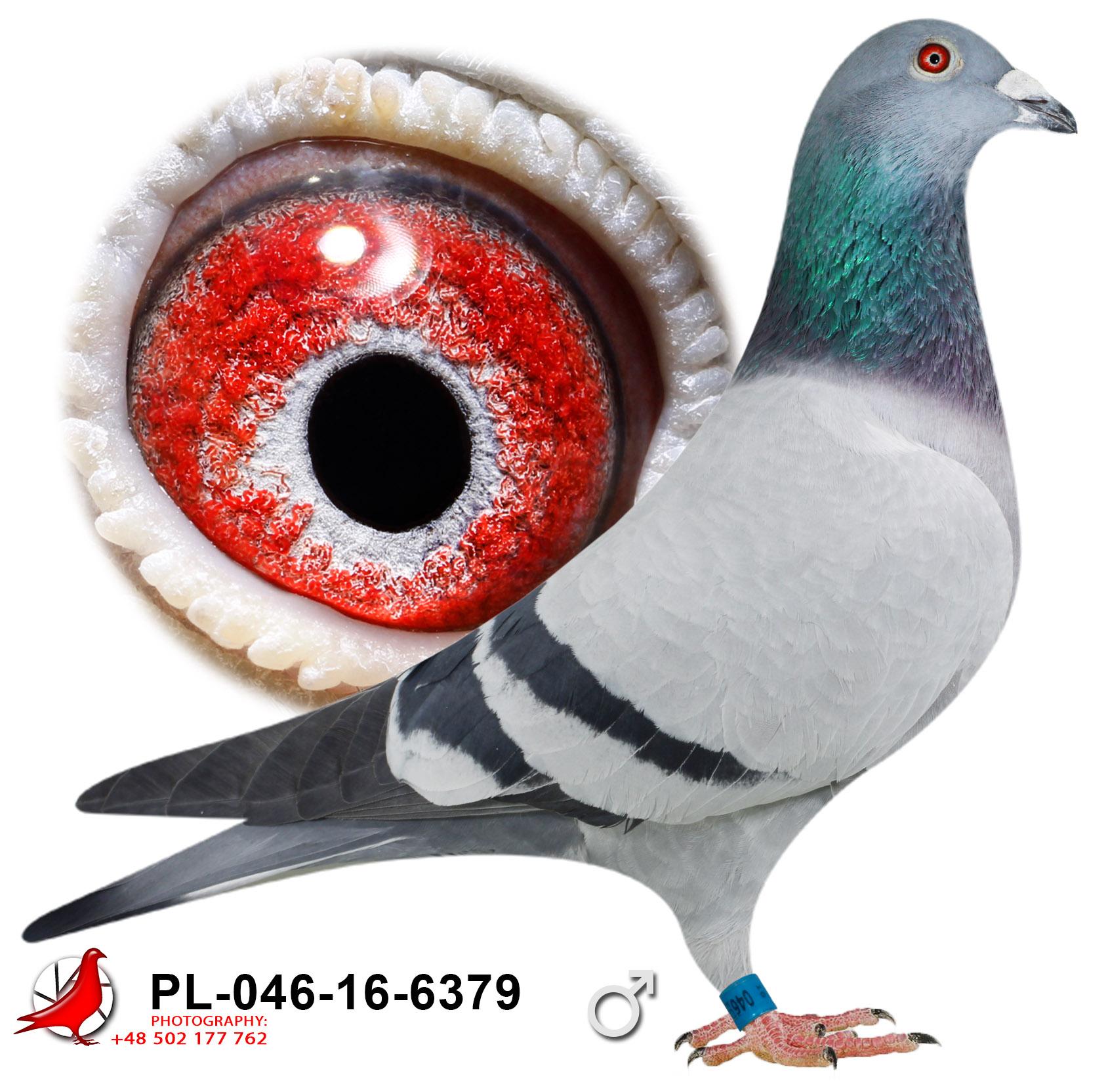 pl-046-16-6379_c