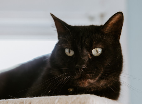 The Truth About Black Cats