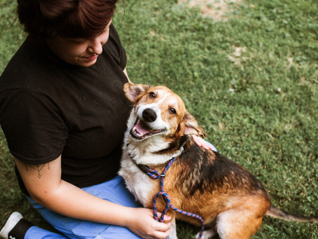 Five Fall Safety Tips for Your Pooch