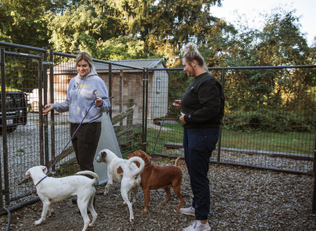 Why You Should Volunteer at an Animal Rescue