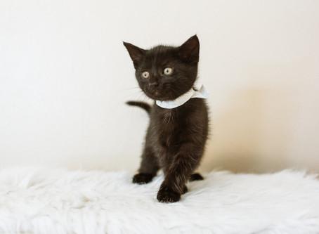 Celebrate Black Cat Awareness Month