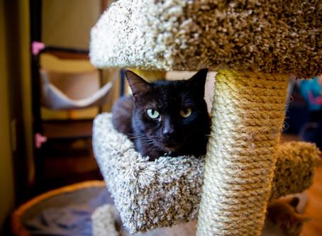 Five Ways to Help Your New Cat Adjust