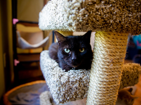 Five Ways to Help Your New Cat Adjust