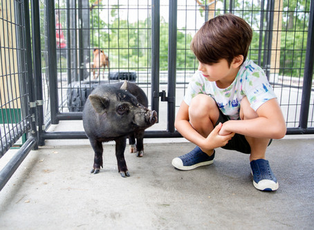 The Importance of Animal Welfare Education