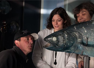 Le retour du coelacanthe