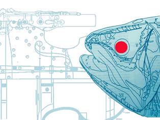 GOMBESSA mémoire de coelacanthe   Spectacle Art & Science - Création 2017
