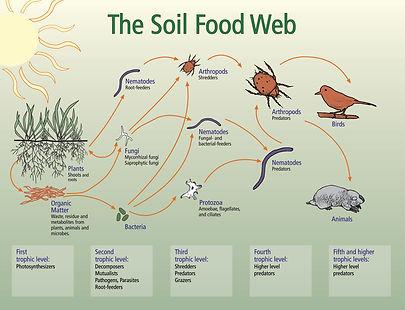 soil food web.jpg