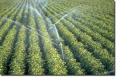 irrigation402x264s.jpg