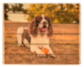 6 panel phlatt, wooden pet photo, pet decor, wooden picture pallet, dog photo on wood