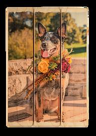 3 panel phlatt, pet on wood, wedding photo on wood, picture pallet, dog on wood