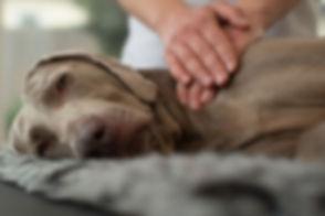 dogs-massage-gloucester.jpg