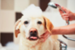 Grooming-Lab-Bath-1024x682.jpg