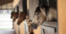 horse-2649609_1920-770x405.jpg