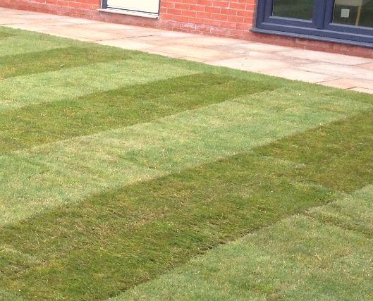 Double Strip Turf Lawn