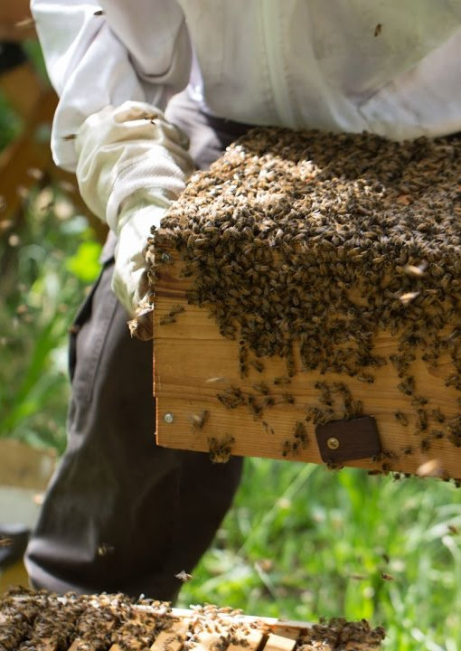 Comprar miel online