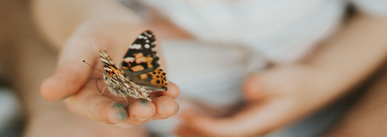 A.Butterfly .jpg