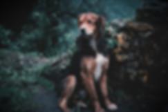 Tierfotografie Hundefotografie Bergisch Gladbach
