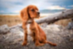 Tierfotografie leverkusen.jpg