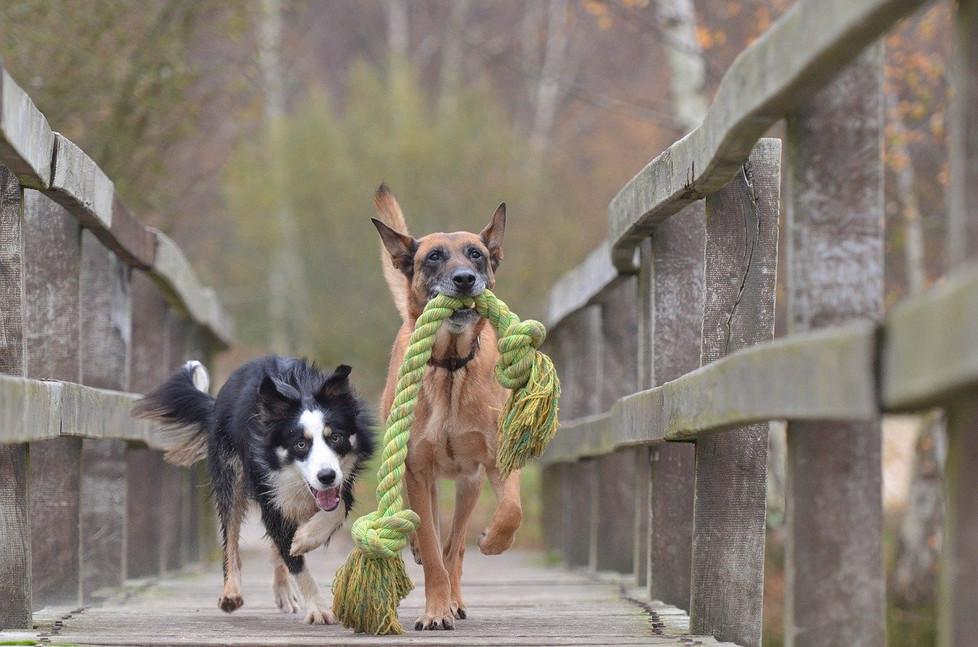 Hundefotografie Leverkusen