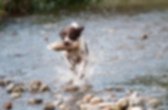 Hundefotografie Bergisch Gladbach