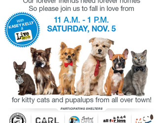 Pet-Adopt-A-Palooza—November 5
