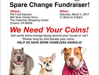Donate Your Coins to Save Dogs!