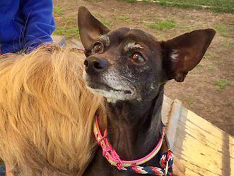 "AFLAR Rescues ""Precious"" from Shelter"
